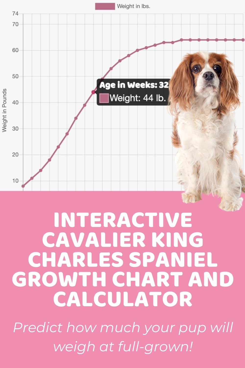 Interactive Cavalier King Charles Spaniel Growth Chart and Calculator