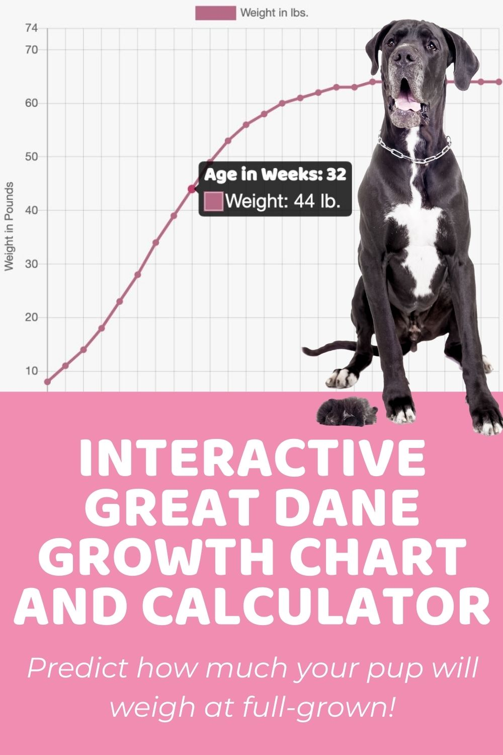 Interactive Great Dane Growth Chart and Calculator