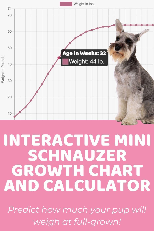 Interactive Mini Schnauzer Growth Chart and Calculator