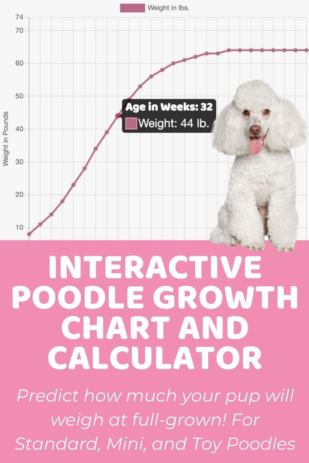 Interactive Standard Poodle Growth Chart and Calculator