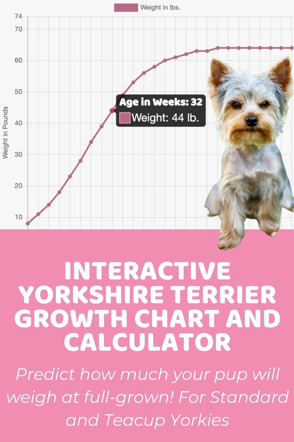 Interactive Yorkshire Terrier Yorkie Growth Chart and Calculator