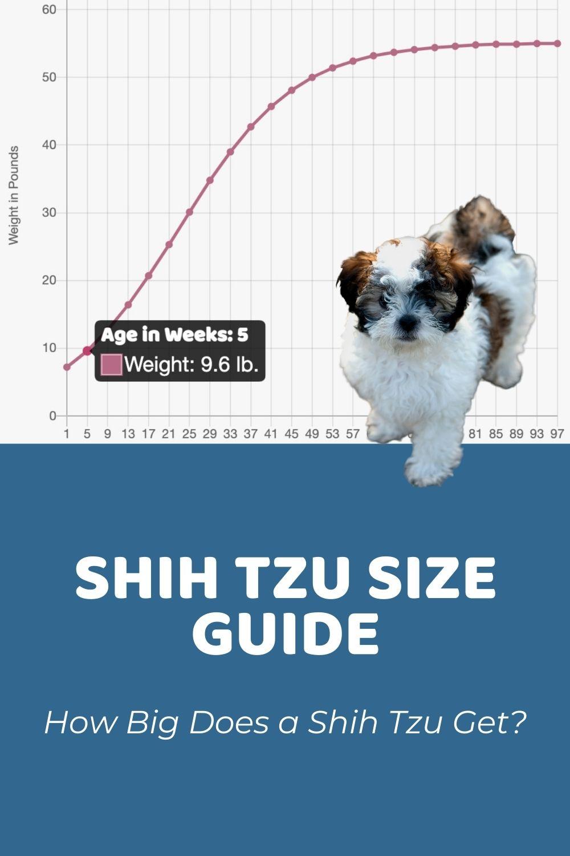 Shih Tzu Size Guide_ How Big Do Shih Tzus Get_