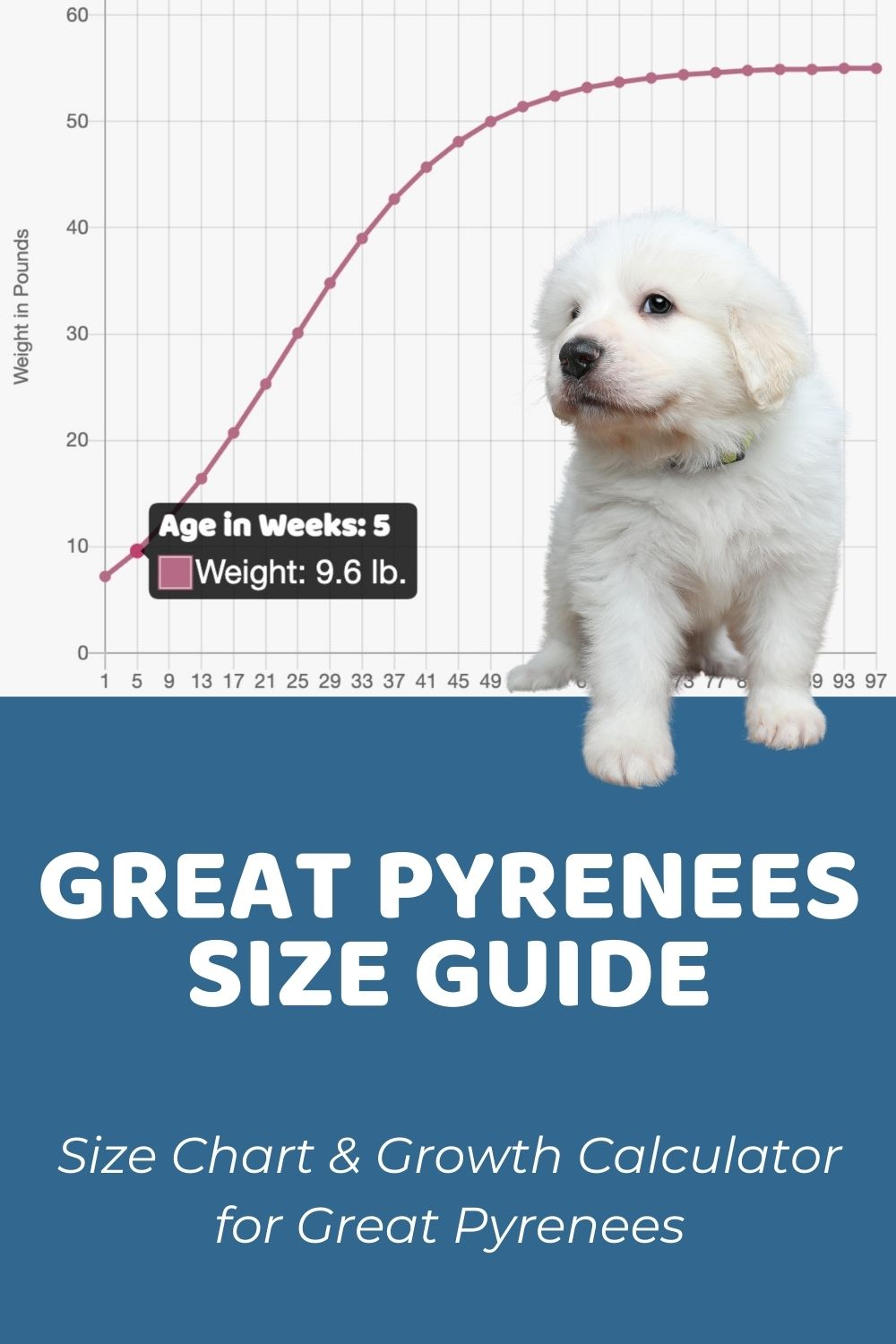 Great Pyrenees Size Guide_ How Big Do Great Pyrenees Get_