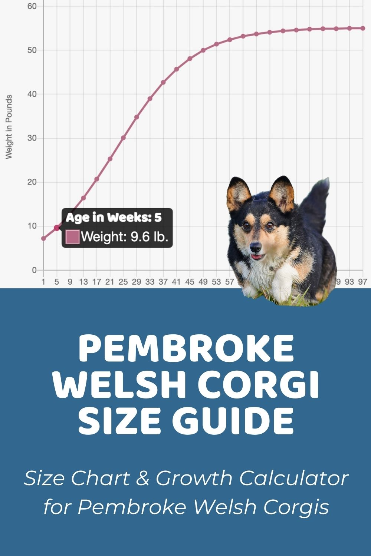 Pembroke Welsh Corgi Size Guide_ Size Chart & Growth Calculator