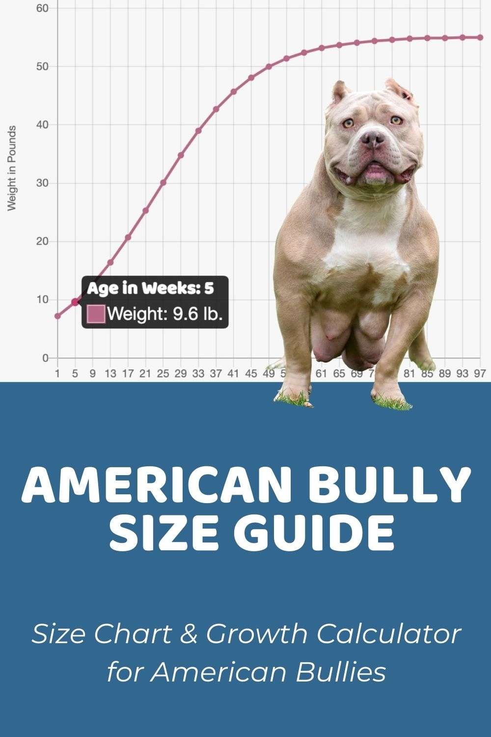 American Bully Size Guide How Big Does an American Bully Get - Puppy Weight Calculator
